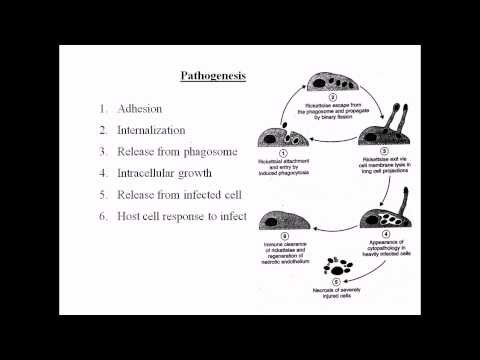 Определение днк вируса гепатита в методом пцр