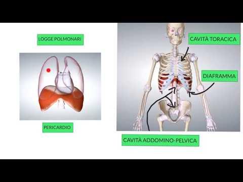 Allocazioni sanguinose di vita di fondo di stomaco di dolore