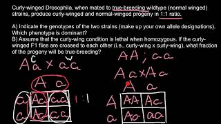 How To Solve Genetics Word Problems