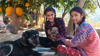 पहाड़ी संतरे    Malta    माल्टा    Pahadi Fruits    Pahadi Puppy    Village Lifestyle In Uttarakhand