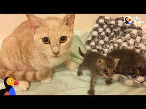 Cat Mom Nurses Orphaned Kittens  | The Dodo