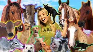 Feeding ALL MY ANIMALS in ONE VIDEO   40+ PETS Night Feeding Routine!