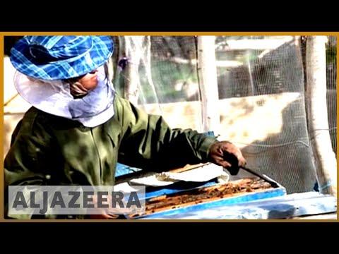 🇦🇫 Honey money: Afghanistan's teen bee-businesswoman | Al Jazeera English