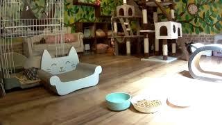 子猫の部屋Live@笑にゃんこ王国(秩父) [Cat live]