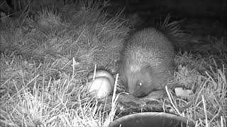 Wildlife Trail Camera - 10.4.2019