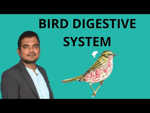 , title : 'Bird digestive system  pigeon digestive system  B.Sc Zoology  NEET Zoology