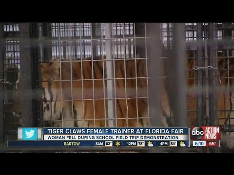 Tiger Claws Female Trainer At Florida Fair