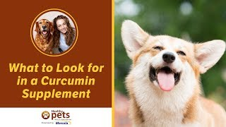 Dr. Becker Discusses What to Look for in a Curcumin Supplement