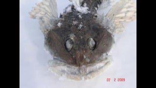 Маршрут на рыбалку де-кастри с владивостока