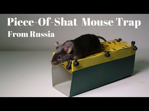 Archives Videos Mousetrap Monday With Shawn Woods
