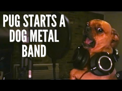 An all dog heavy metal band is as ridiculous as you'd think.