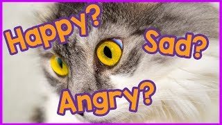 What Do Cats Eyes Mean? Looking Into The Meaning Behind A Cats Eyes, Cat Psychology And Emotions!