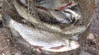 Пос шлюз гремучий рыбалка