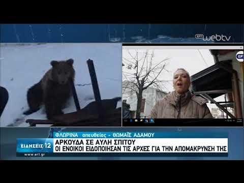 Φλώρινα : Αρκούδα σε αυλή σπιτιού  μέσα στην πόλη   05/04/2020   ΕΡΤ