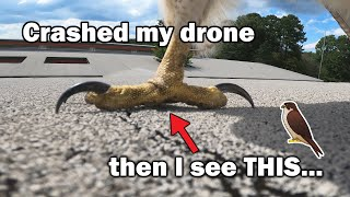 Drone attacked by a HAWK!!! - Interesting FPV drone moments over the years