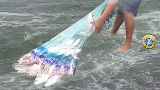 Mira!!... Los MEJORES Vídeos de Gran #pesca hecho por Pescadores