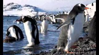 """פינגווין ג'נטו במסע לאנטארקטיקה (יח""""ץ)"""