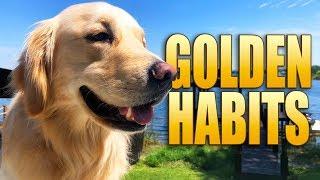 Weird Golden Retriever Habits