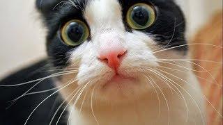 Приколы с котами | Подборка видео приколов про котов