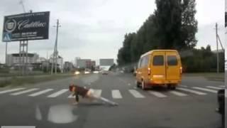 в стельку пьяная девушка с трудом переползает на другую сторону дороги