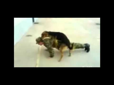 Dog Humping Man - Dog Attacks  Soilder Fail