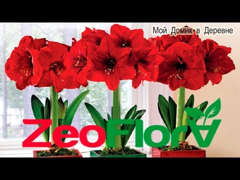 Гиппеаструмы ! Посадка в новый грунт для луковичных цветов ZeoFlora