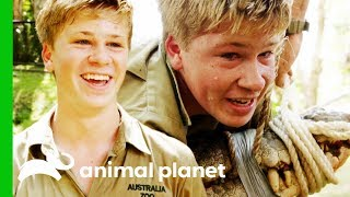 Robert Irwin Head-Jumps His Biggest Croc Ever! | Crikey! It's The Irwins