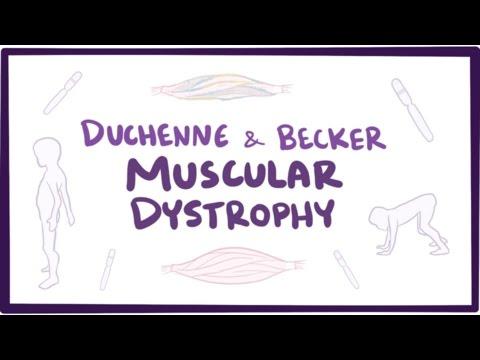 Duchenne & Becker muscular dystrophy - causes, symptoms, treatment & pathology