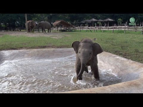 A Playful Baby Elephant Splashing in Water - Adorable!