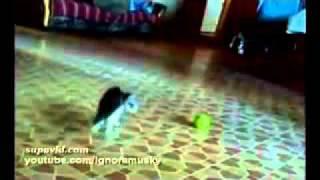 кот против мячика