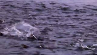 maruta☆Flyfishing