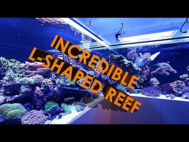 INCREDIBLE L-SHAPED REEF AQUARIUM (3500 LITRES)!!