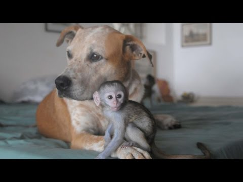 Dog Becomes Mother To Monkeys