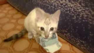 Кот ворует деньги))) Очень смешно ))))