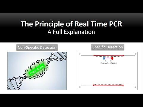 The principle of Real Time PCR, Reverse Transcription, quantitative rt-PCR