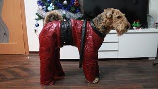 Как сшить комбинезон для собаки: пошаговая инструкция