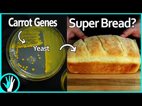 Guy genetically modifies yeast to produce vitamin A, then bakes bread with it