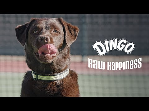 Dingo Commercial (2017 - 2018) (Television Commercial)