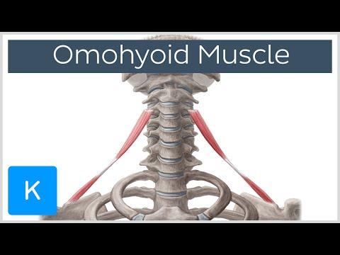 Trigger sur les muscles