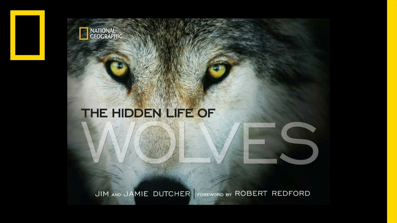 The Hidden Life of Wolves | National Geographic thumbnail