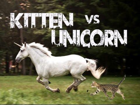 Kitten vs Unicorn