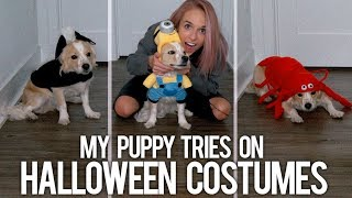 MY PUPPY TRIES ON HALLOWEEN COSTUMES - Video Youtube