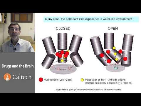 La codificazione chimica da dipendenza alcolica