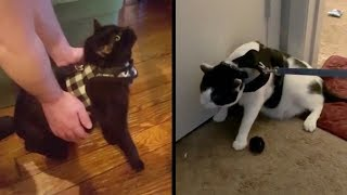 BEFORE You Buy A Cat Harness Or Leash, WATCH THIS!
