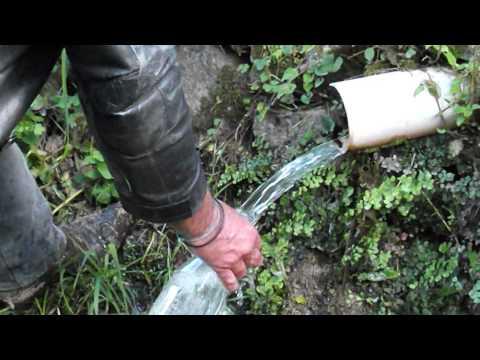 Come trattare vermi alle condizioni di casa