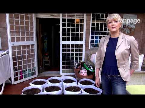 Come piantare marijuana e non essere arrestati: intervista a Rita Bernardini (Radicali)