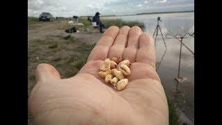 Воздушная пшеница для рыбалки на леща