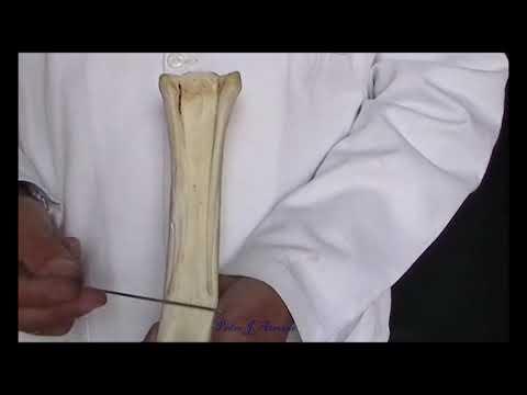Ligamentele aduse în articulația cotului
