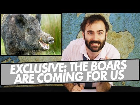 EXCLUSIVE: The Boars Are Coming For Us - A SPECIAL NEWS