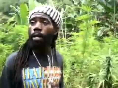 Bob Marley's marijuana plantation in Jamaica Tour presentation